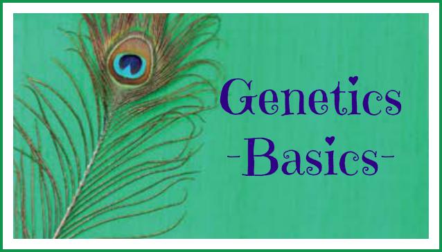 genbasics